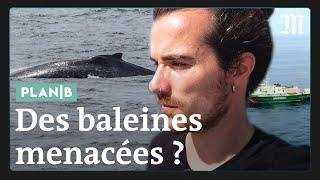 Download En danger, ces baleines de Guyane sont nos vigies naturelles #PlanB Video
