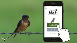 Download Explore Merlin Bird ID App - eBird Essentials Video