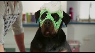 Download Show Dogs - Trailer Video