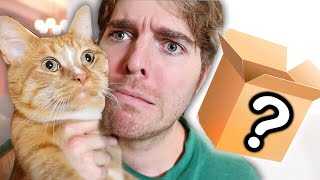 Download WEIRD CAT PRODUCTS I BOUGHT ONLINE Video