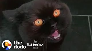 Download 5 Reasons Why Everyone Needs A Black Cat | The Dodo Video