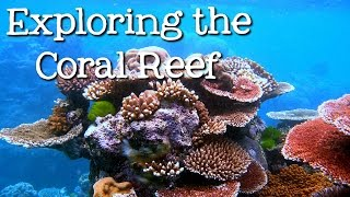 Download Exploring the Coral Reef: Learn about Oceans for Kids - FreeSchool Video