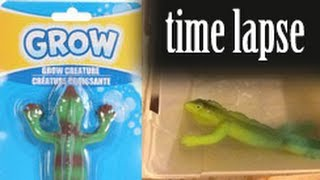 Download GROW! Lizard - Time Lapse Video