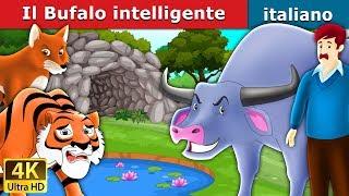 Download Il Bufalo intelligente | Storie Per Bambini | Fiabe Italiane Video