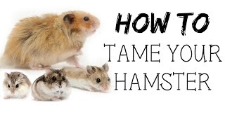 Download How to TAME your hamster! Video