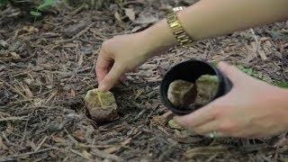 Download Interra Le Bustine di Tè nel Tuo Giardino e Guarda Cosa Succede Video
