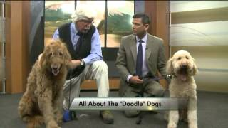 Download All about Doodle Dogs Video