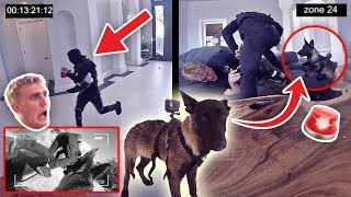 Download HOW WILL APOLLO REACT TO A BURGLARY?! **PUPPY EXPERIMENT** Video