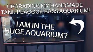 Download Peacock bass aquaurium Video