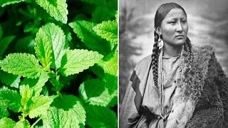 Download 6 Plants Native Americans Use To Cure Everything Video