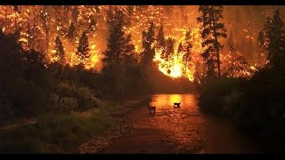 Download WOW! Look what they just found in Tennessee Wildfires! Video
