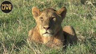 Download safariLIVE - Sunrise Safari - September 24, 2018 Video