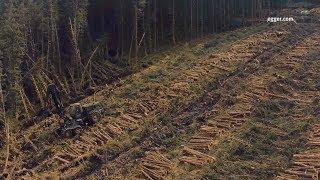Download EGGER (UK) Forestry Video