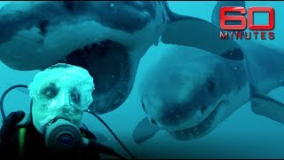 Download Face to face with great white sharks: Outside the cage and totally exposed | 60 Minutes Australia Video