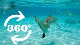 Download Bora Bora Sharks and Rays in VR 360 Video! Video