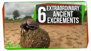 Download 6 Extraordinary Ancient Excrements Video