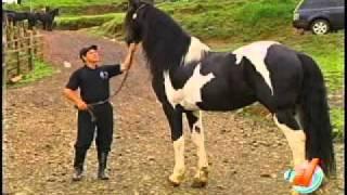 Download Conozca un caballo único en el país Video