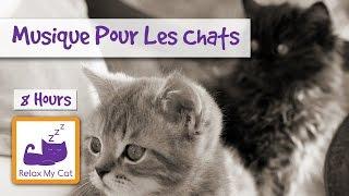 Download Musique de relaxation pour votre chat ou chaton Video