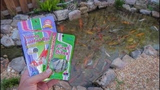 Download MINI FISH FOOD for NEW BABY FISH!!! Video