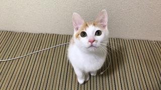 Download 生放送で猫達と遊んでみた! Video
