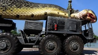 Download Giant Snake Caught in Red Sea Video