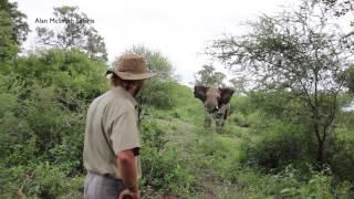 Download Alan McSmith elephant encounter1 Video