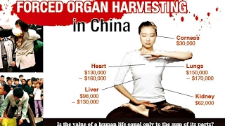 Download Illegal Organ Harvesting in China - Between Life and Death Video