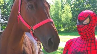 Download Spiderman takes care of the horse Video