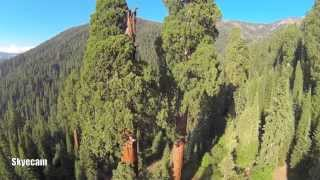 Download Aerial Flight of the Sequoia National Forest Video