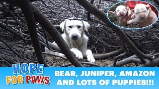 Download Homeless Labrador mom tried to trick us, but we found all her puppies!!! Please share. Video