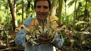 Download British Indian Ocean Territory – coconut crabs Video