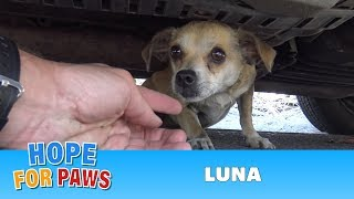 Download How a little microchip changed this dog's life!!! Please share this important video. Video