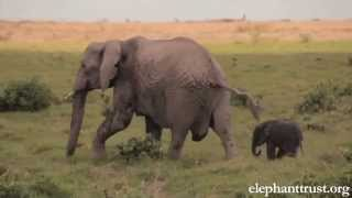 Download Elephant Baby-Mother love will make U cry Video
