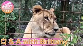 Download Q&A with Brittany 12102018 Video