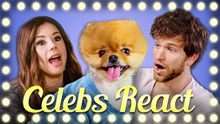 Download CELEBS REACT TO HOWTOBASIC Video