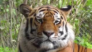 Download Ein Tag im Tierpark Hellabrunn München 2016 HD Video