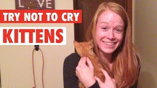 Download People Get Surprised With Kittens | Try Not To Cry Video