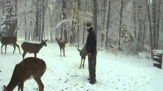 Download Hand feeding deer, What happens when corn, Phil & wild deer all meet in the same place? Video
