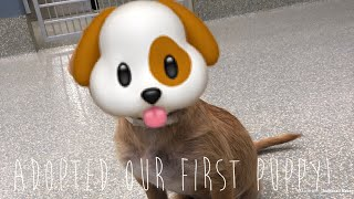 Download First Time Adopting A Puppy From Houston SPCA Video