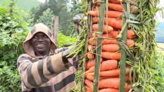 Download Rwanda Agriculture Board RAB Activites Video