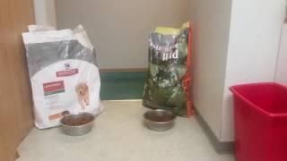 Download Taste of the wild vs Science diet puppy food Video