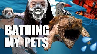 Download Bathing My Pets - How I Bathe All My Animals Video