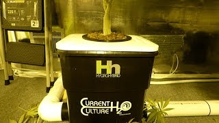 Download Dwc Water Change In Depth - Hygrohybrid Video