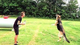 Download BAD IDEA... DOG vs MEAT DRONE!! Video