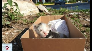Download Rescue of two baby kittens left to die of hunger on the street Video