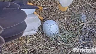 Download SWFL Eagles ~ M15 Incubates Egg #1 for the First Time; Rolling & Views of Egg 11.19.17 Video