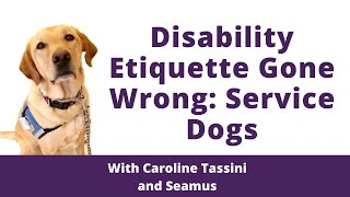 Download Disability Etiquette Gone Wrong: Service Dogs Video