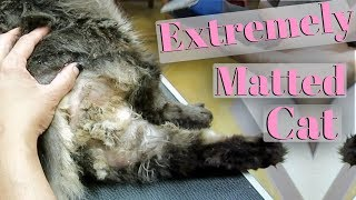 Download Severely Matted Cat Video