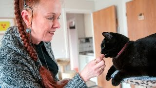 Download Do you understand what your cat is trying to say? Video