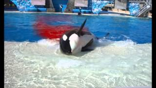 Download The Truth About Orca Captivity Video